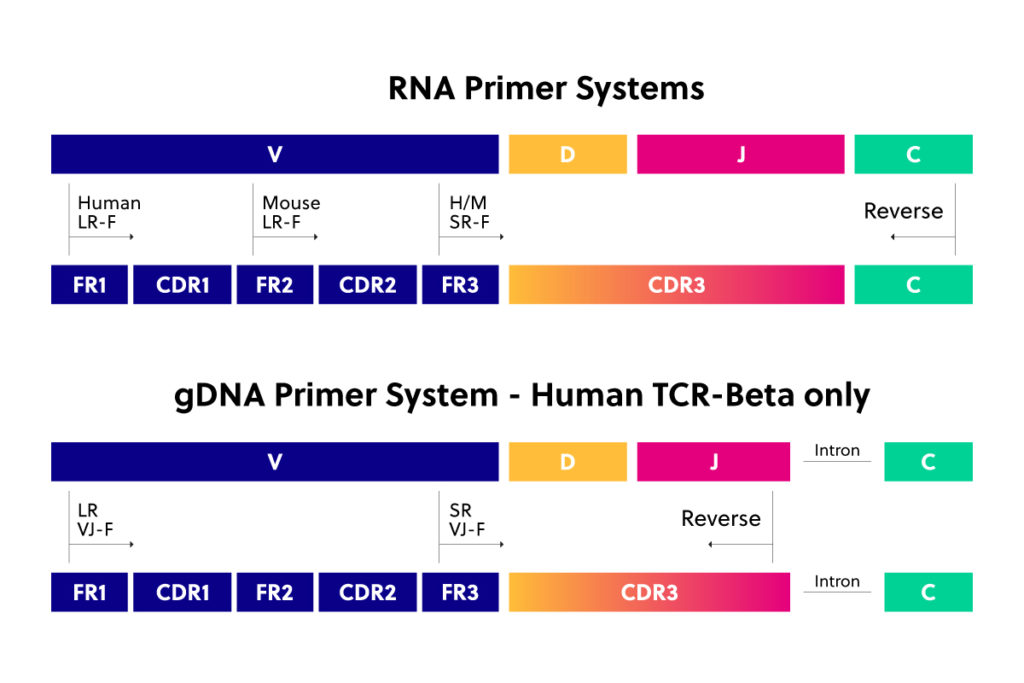 All of iRepertoire's primer systems for immune repertoire sequencing cover the highly variable CDR3 region