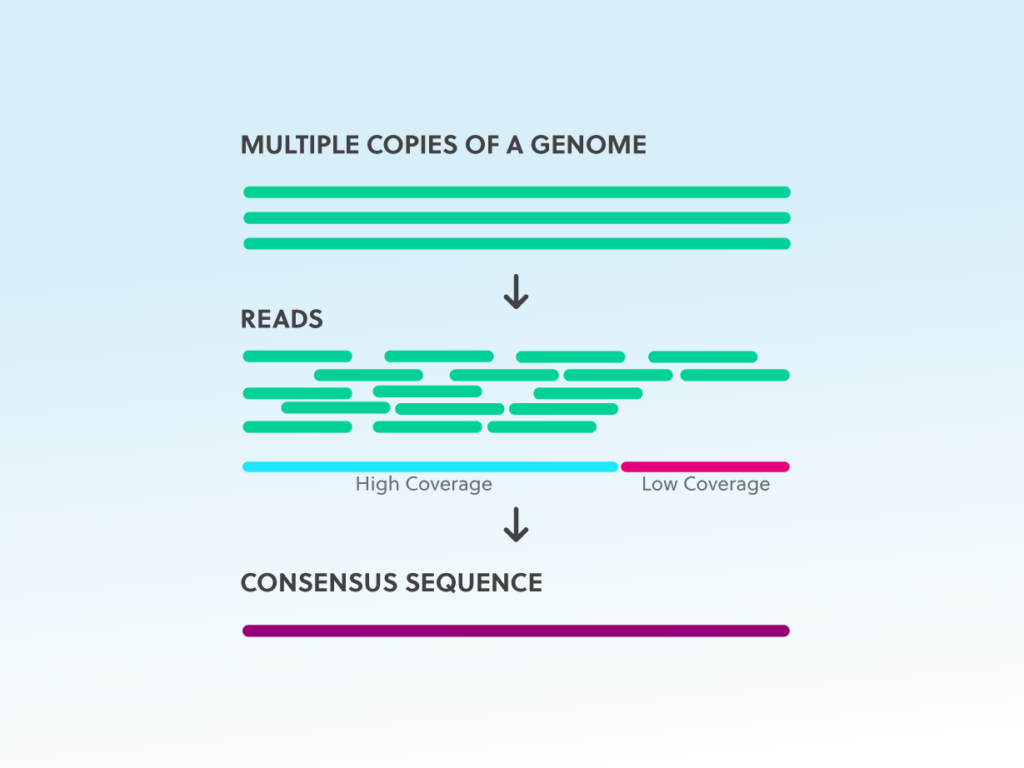 Simple graphic describing the difference between high and low coverage regions in next generation sequencing: higher coverage equates to more reads