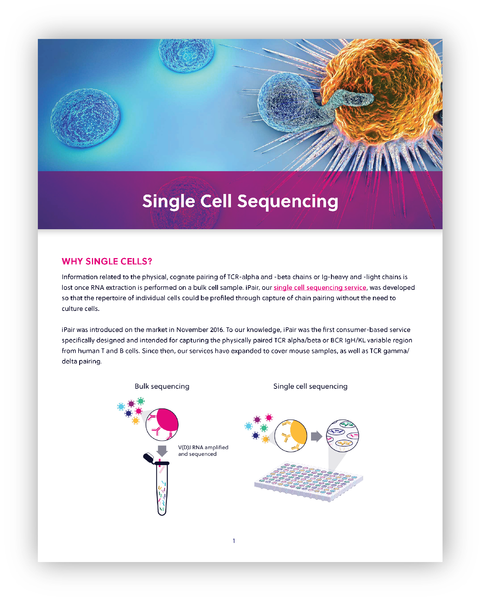 Single Cell Immune Sequencing brochure first page thumbnail. Download the full brochure now.