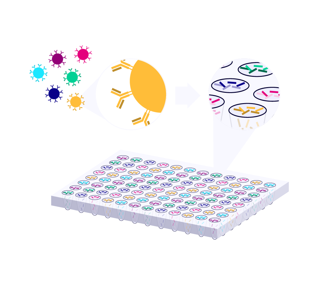 Single cell immune sequencing preserves information about the cognate pairing of BCR and TCR chains. Paired TCR and BCR chains are shown in the wells of a stylized iPair plate.
